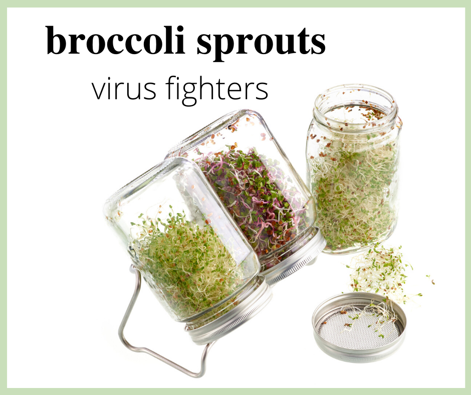 Antiviral Broccoli Sprouts